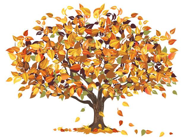 Ağaçlar Nasıl Büyür Cicicee