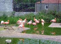 Boğaziçi Hayvanat Bahçesi