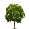 agac-tree-20130329135946