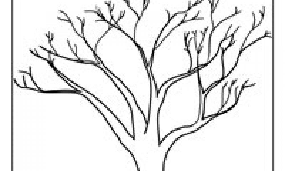 Ağaç Cicicee
