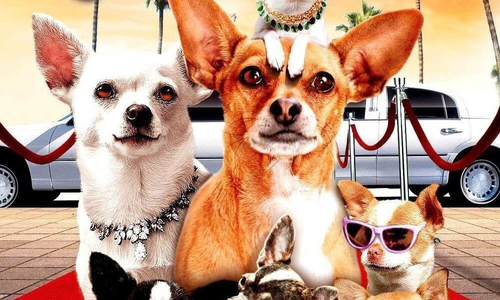 All About Trailer Du Film Le Chihuahua De Beverly Hills Le Www