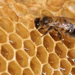 Arı : Bee