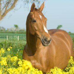 At : Horse