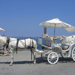 At Arabası : Horse Carriage