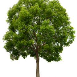 Ağaç : Tree
