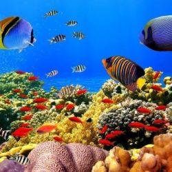 deniz-altinda-neler-var-biyoloji-atolyesi
