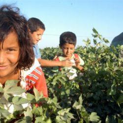 Tarımda Çocuk İşçiliği