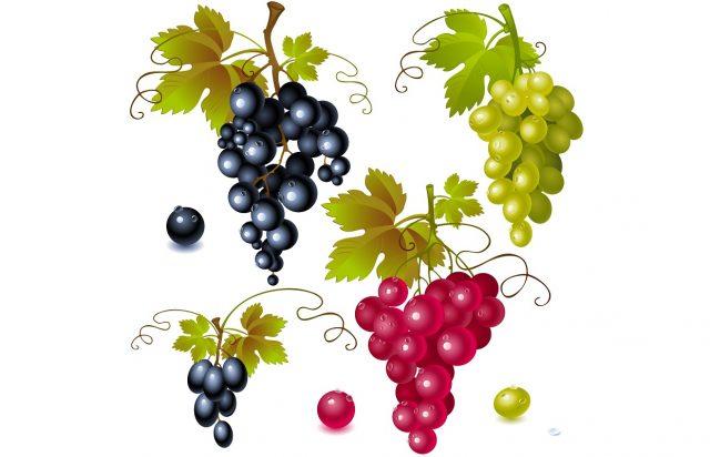 Üzüm - Konuşan Meyveler