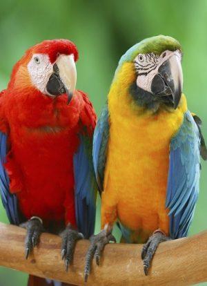 Papağanlar Hakkında Bilgi