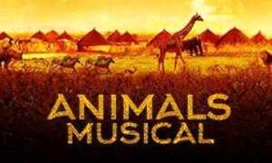 animal musical etkinlik