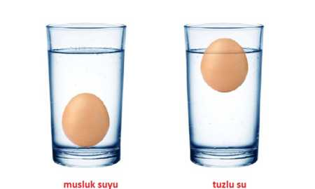 Yumurta suda yüzer mi