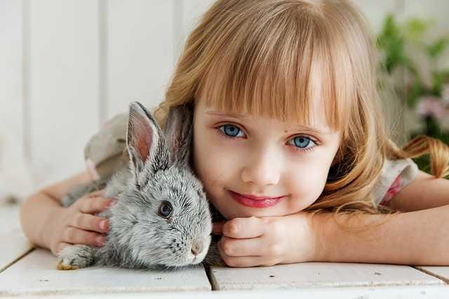 Tavşan Hakkında Bilgi