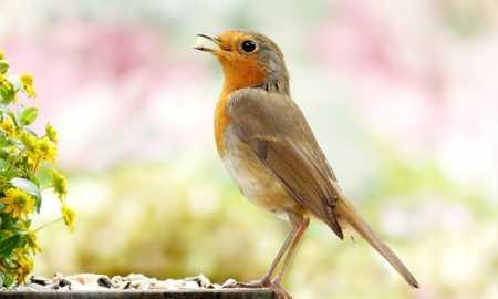 kuşlar hakkında bilgi