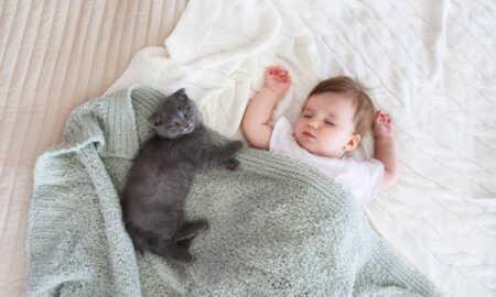 Bebekli evde kedi beslemek
