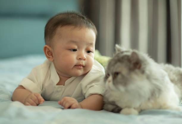 Kediler bebekleri neden sevmez?